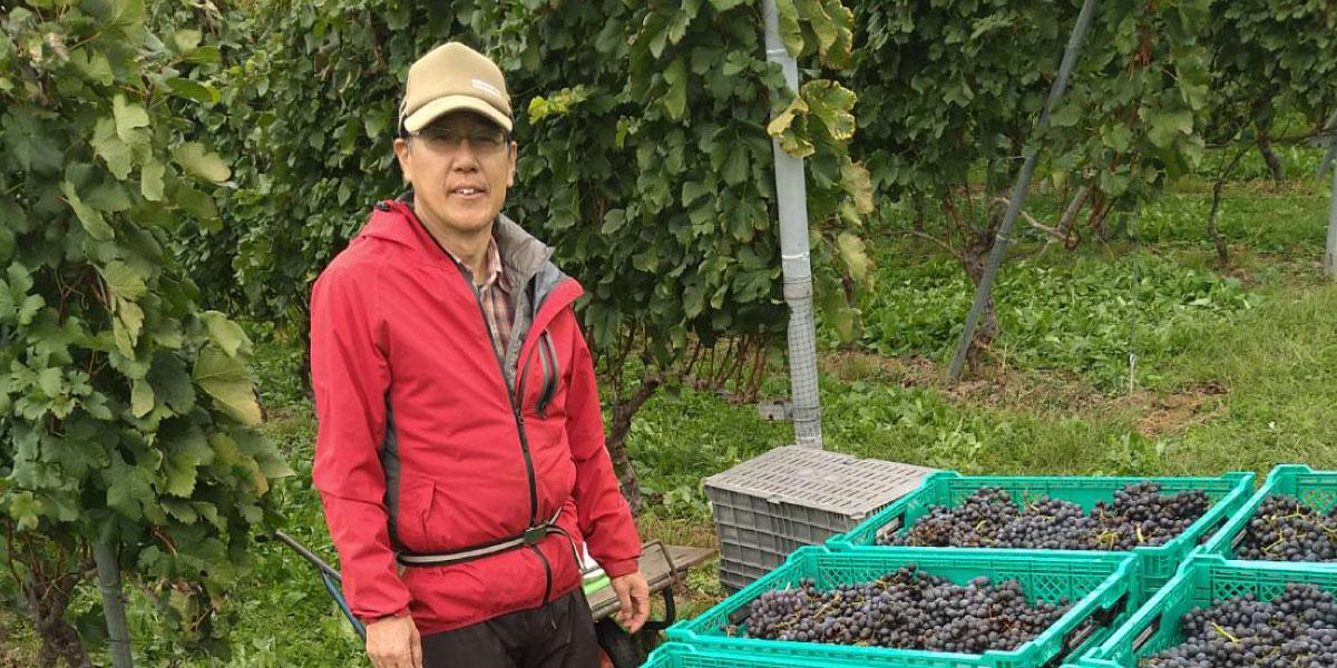 葡萄生産者(佐藤 和之さん)